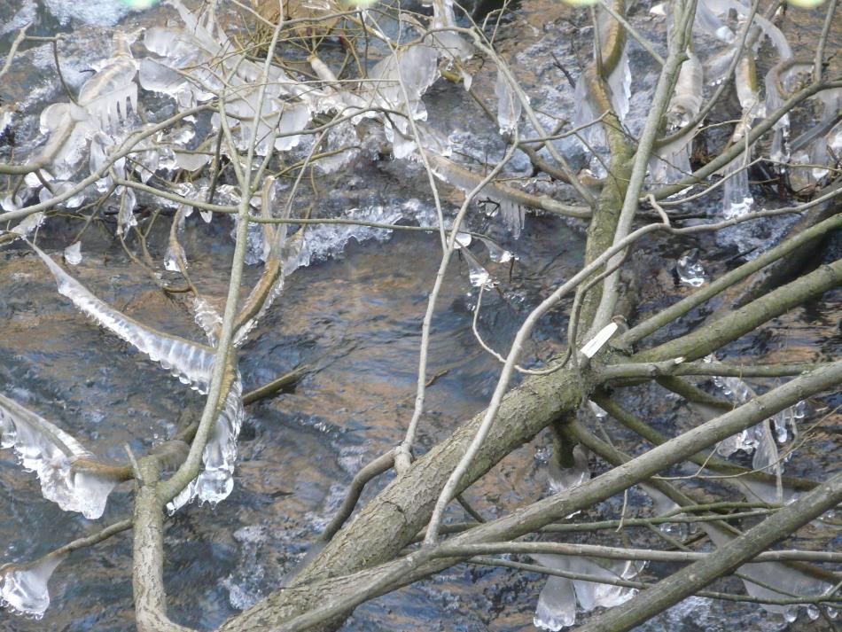Über dem Bach neigen sich die Äste mit Eis