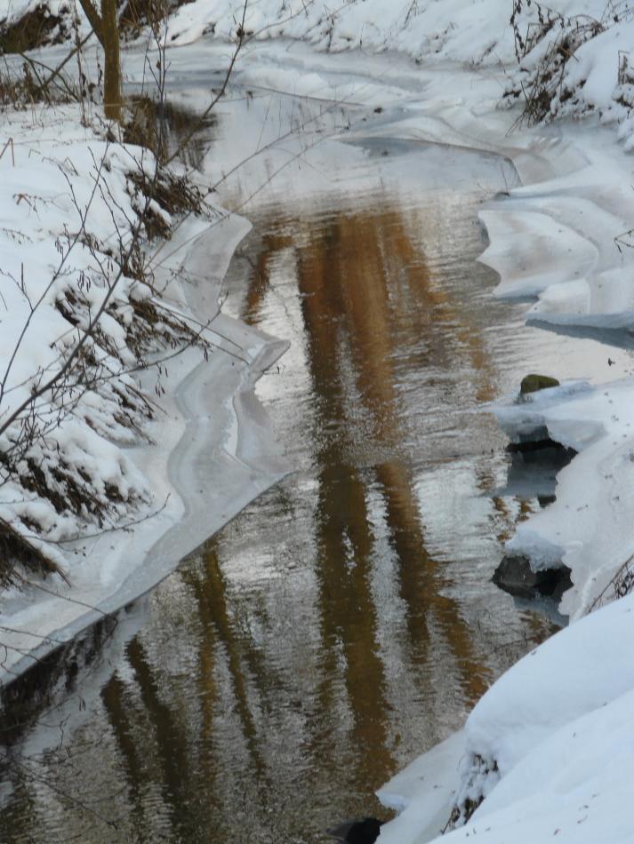 Baumspiegelung im Eiswasser