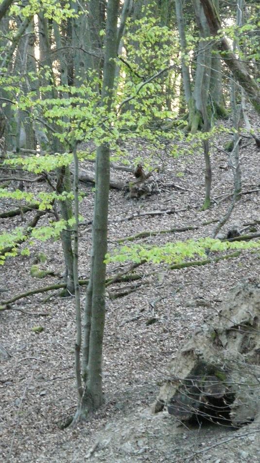 Wald, Niederfischbach