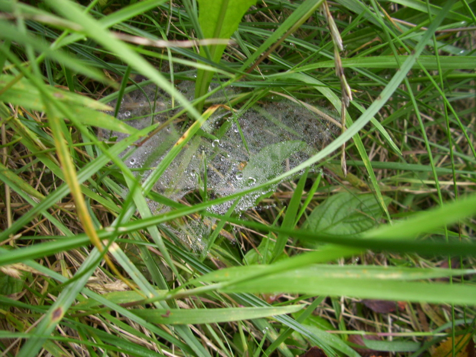 Tropfen am Spinnennetz