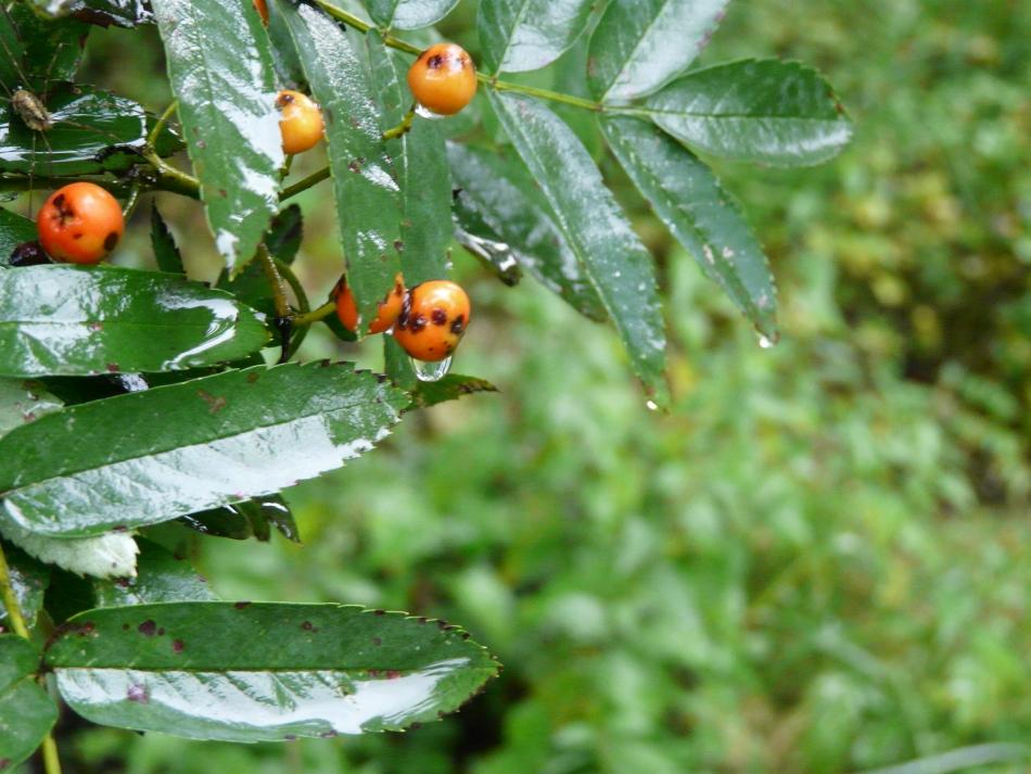 Wassertropfen an orangener Frucht