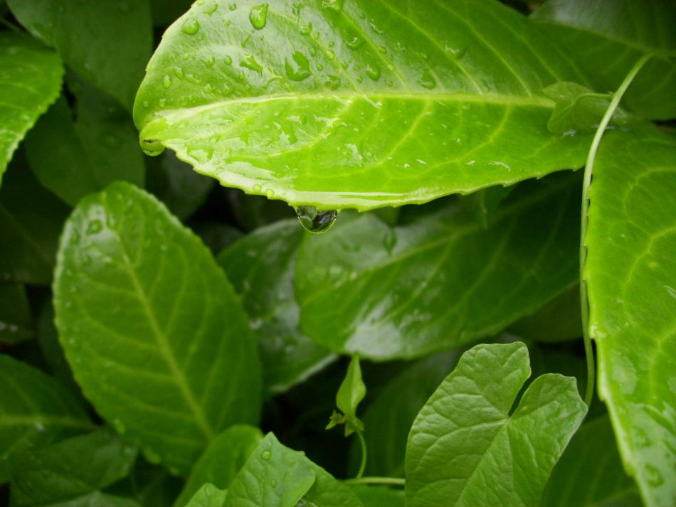 Wassertropfen mit grünem Schimmer