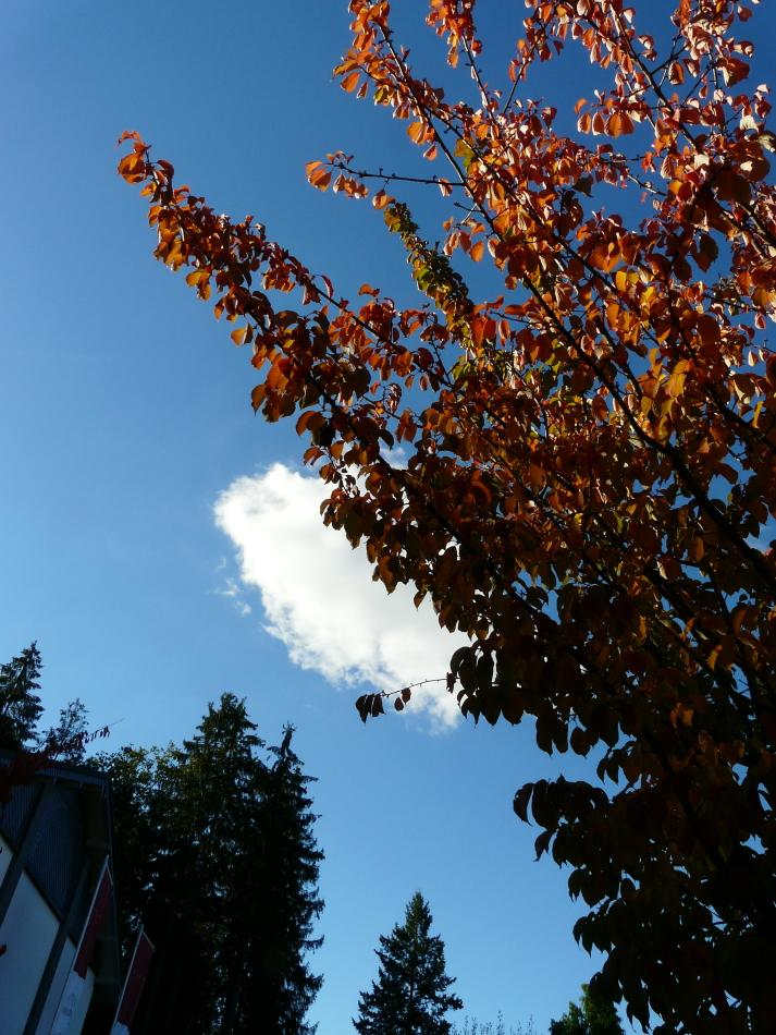 Baum im Herbst mit Wolke