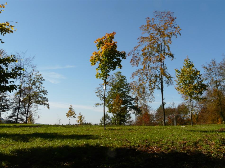 Herbst im Siegener Friedwald