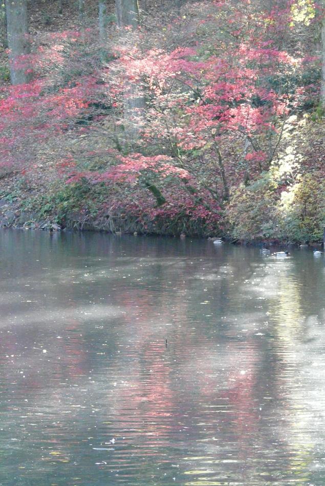 Herbst im Spiegel des Schlossteiches von Bad Berleburg (1)