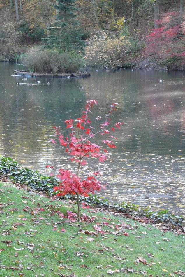 Herbst im Spiegel des Schlossteiches von Bad Berleburg (2)