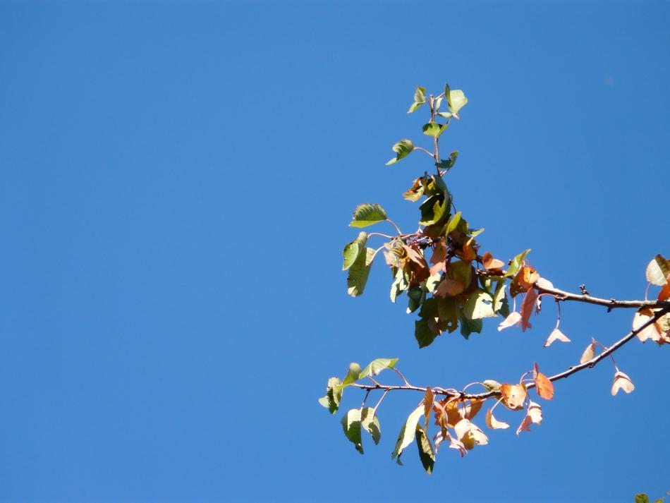 Herbstblätter bei azurblauem Himmel