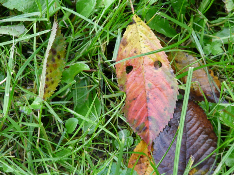 Herbstblatt als Gesicht (1)