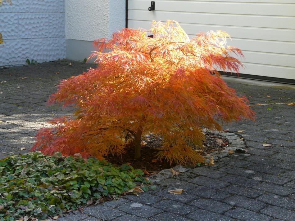 Herbstimpressionen vor der Garage