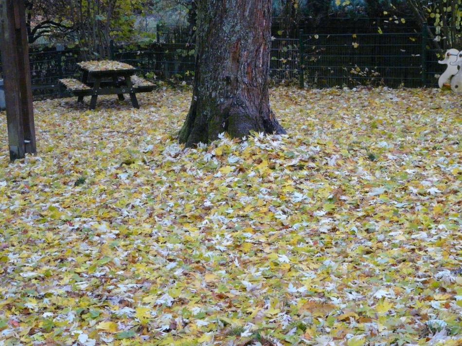 Herbstlaub en mas
