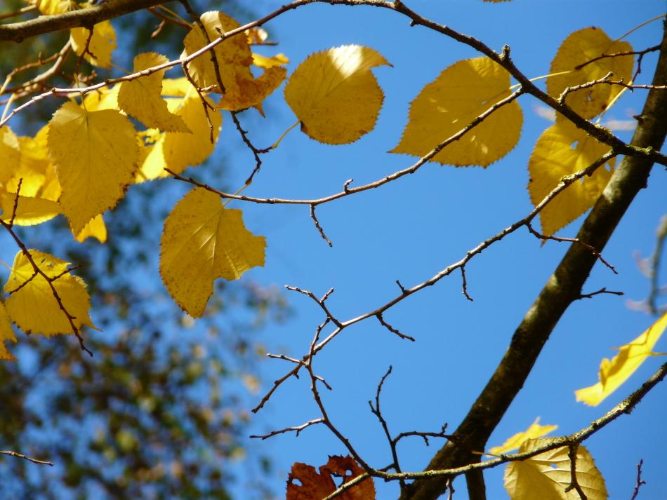 Höhepunkt des Herbstes