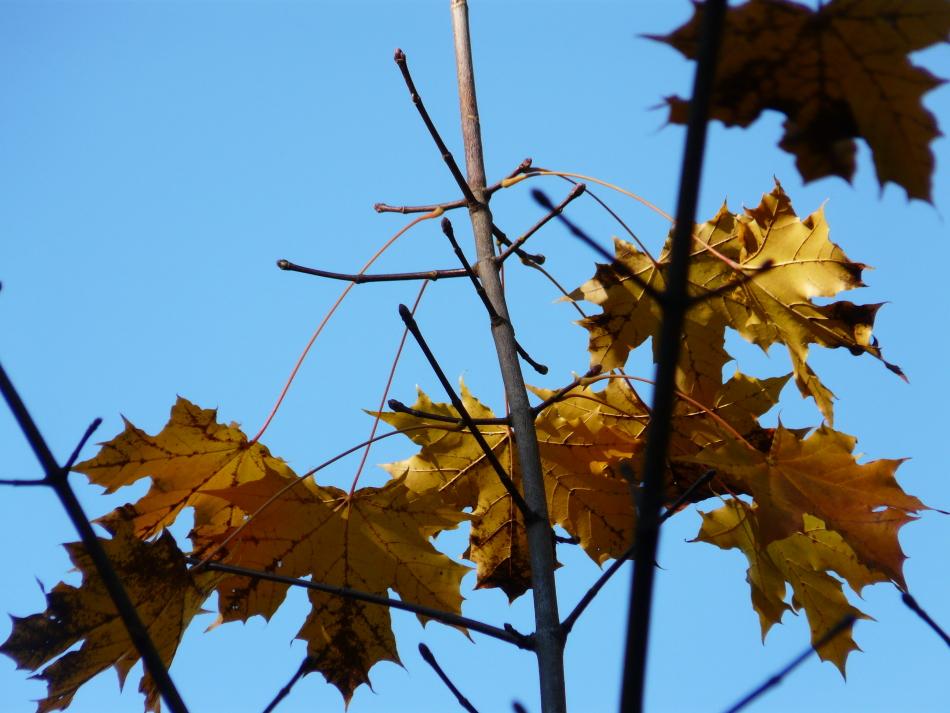 leuchtende vereinzelte gelbe Blätter