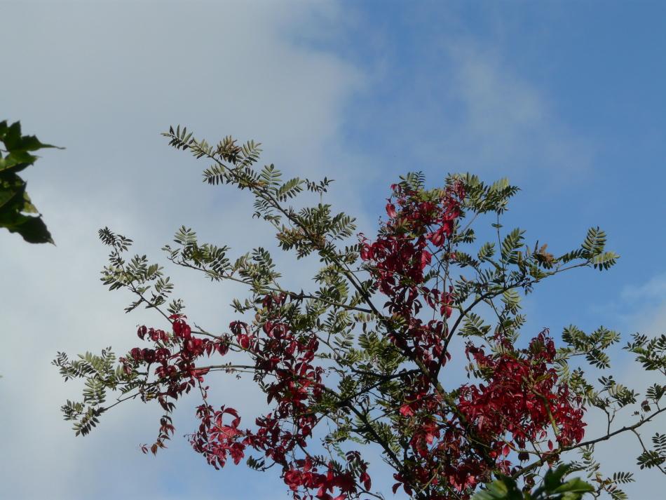 rote und grüne Blätter