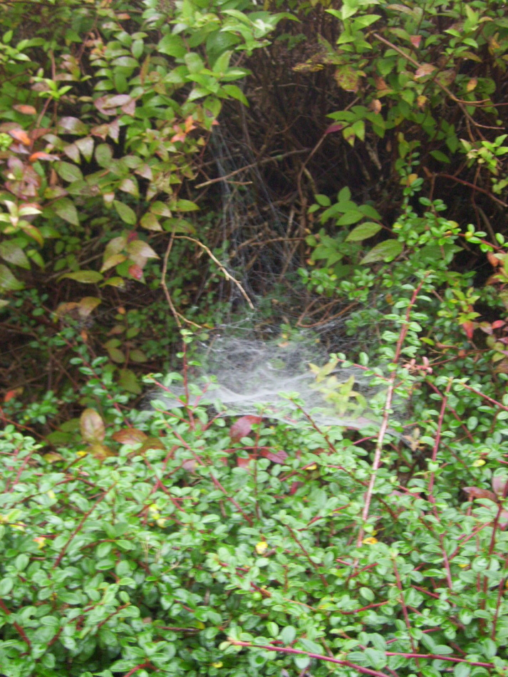 Großes feines Spinnennetz