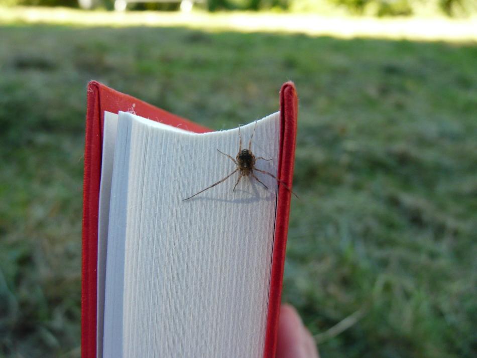 Spinne auf Buch