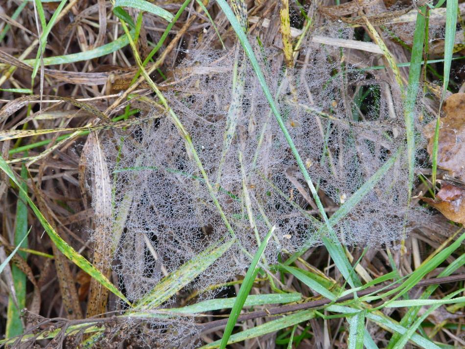 Spinnennetz im Gras