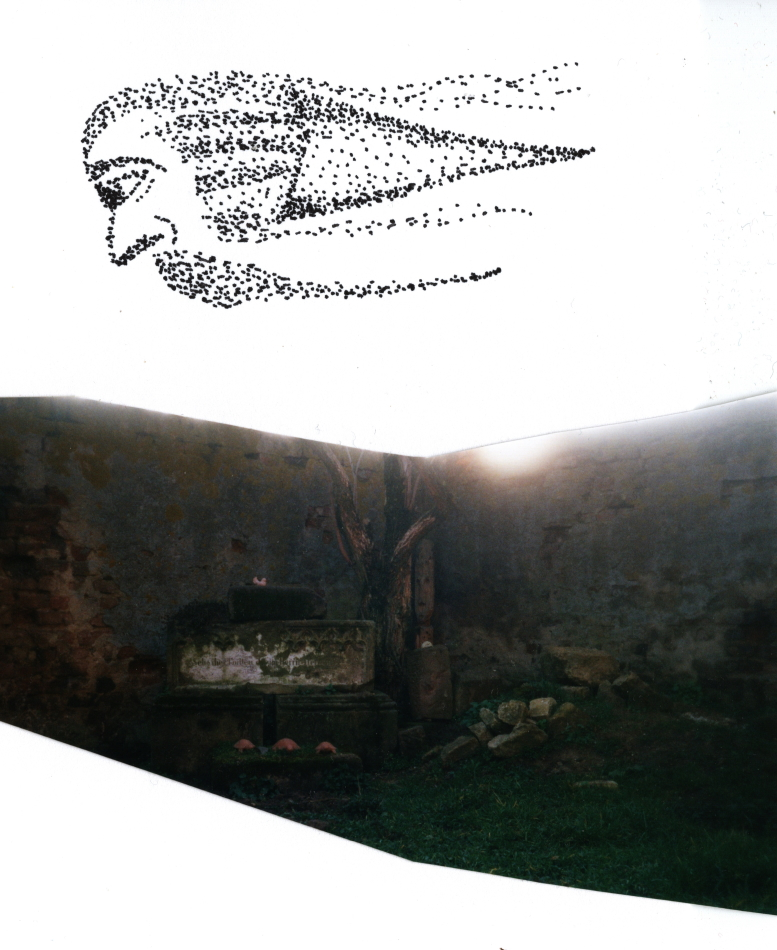 Starenschwarm, Kunst, Formation, Grafik, Zauberer, magischer Ort, Magie