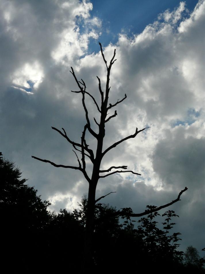 Siegen, Geisweid und Umgebung, Gespräch über Bäume